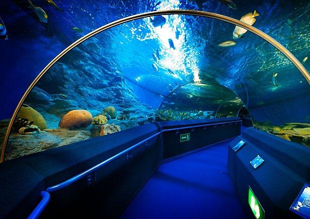 Underwater World Pattaya | Thailand, Pattaya Show & Ticket