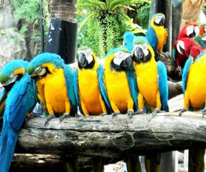Safari World Bangkok with Transfer | Bangkok