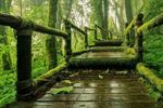 Doi Inthanon National Park Tour