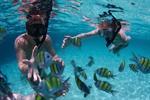 Koh Tao, Koh Nang Yuan Snorkeling Tour