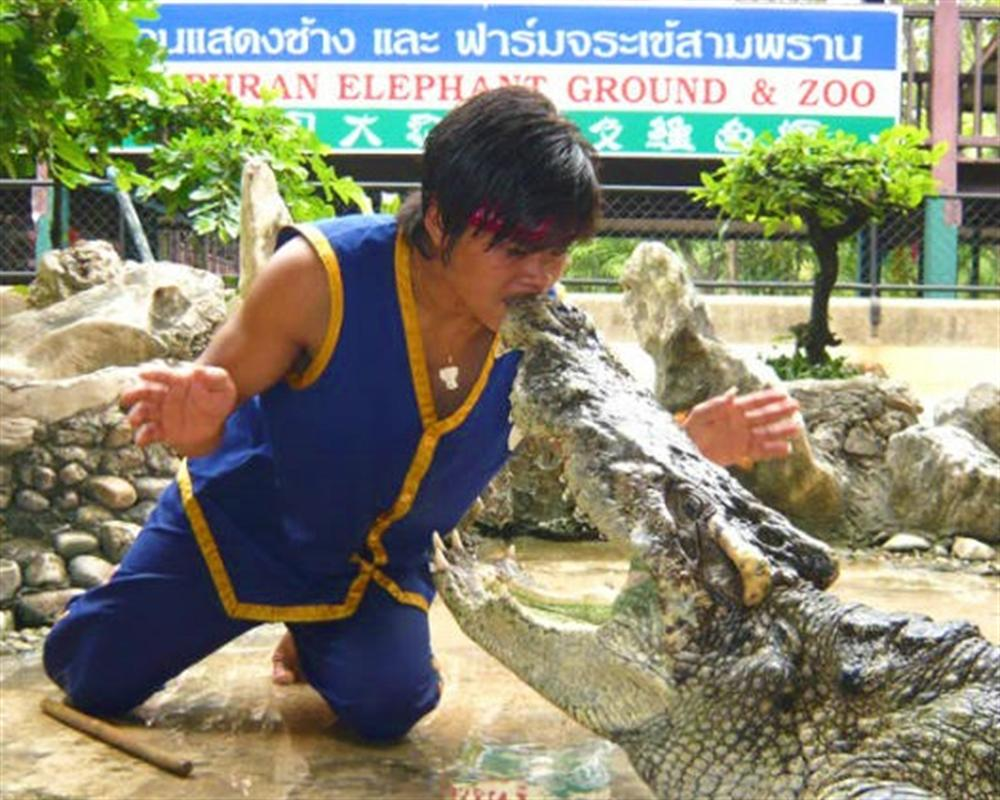Elephant Theme Show and Crocodiles Farm Tour