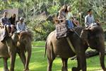 Chiang Mai Elephant Safari Tour