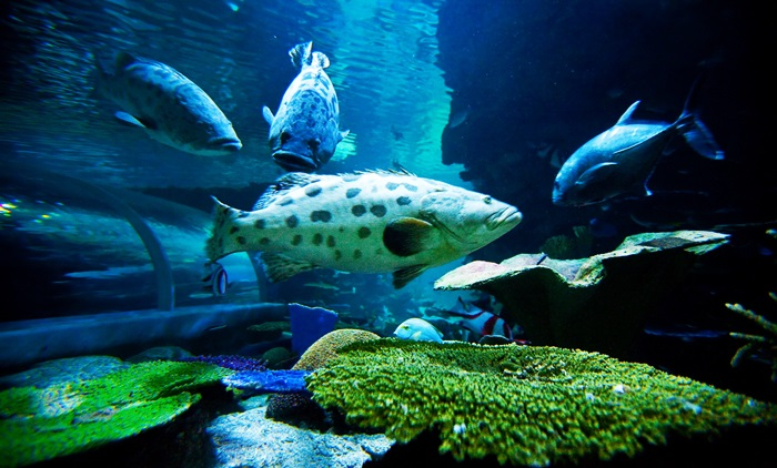 Chiang Mai Zoo Aquarium  Thailand, Chiang Mai Show & Ticket