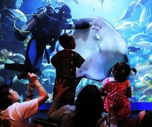 Chiang Mai Zoo Aquarium