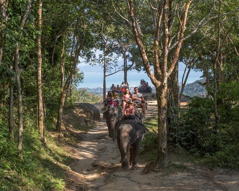 Safari Tour Program B 5in1