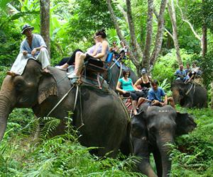 Eco Safari Tour Elephant Trekking Ox-Cart Riding
