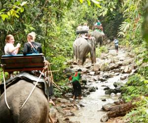 Khao Sok Safari Tour