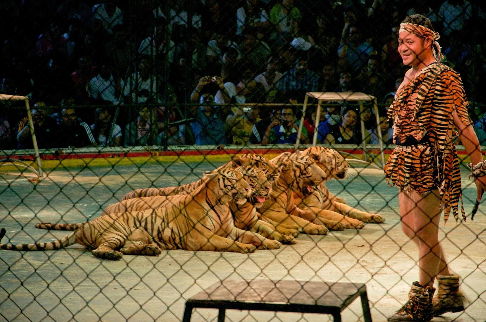 Sriracha Tiger Zoo Chonburi  Thailand, Pattaya Show & Ticket