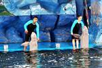 Pattaya Dolphin Show