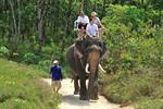 Khao Lak Safari (Elephant Trekking & Bamboo Rafting)