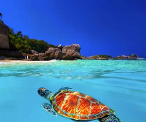 Similan Islands Tours from Krabi