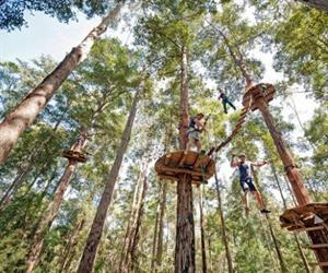 Tree Top Adventure Park Pattaya