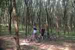 Jungle Cycling Tour Around Krabi