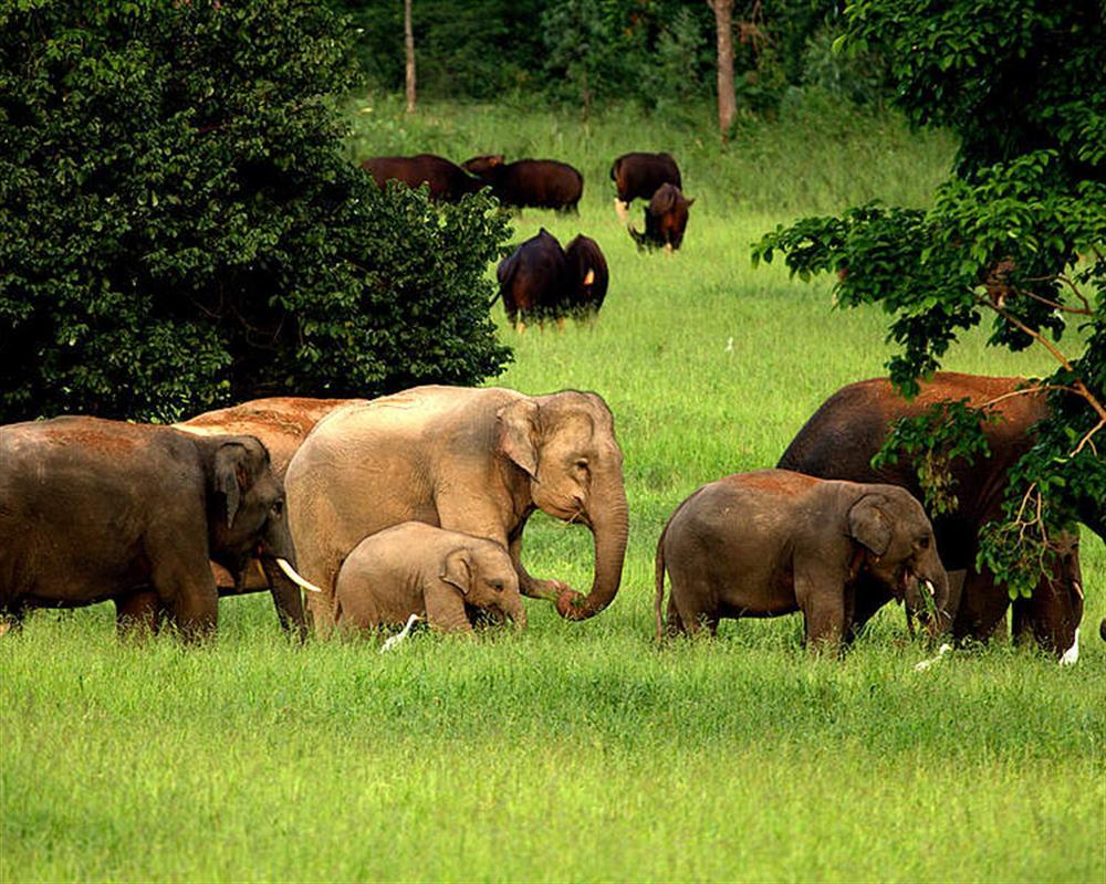 Wild Elephant Watching at Kui Buri National Park