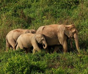 Wild Elephant Watching at Kui Buri National Park