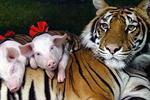 Sriracha Tiger Zoo Day Trip from Bangkok
