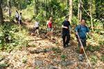 Chiang Dao Hilltribe Trekking Tour