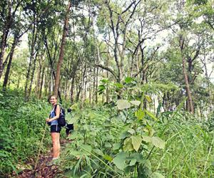 The Historic Opium Trail Trek on Doi Pui Tour