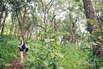 The Historic Opium Trail Trek on Doi Pui Tour