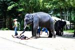 Elephant Trekking and Crocodiles Show in Samui