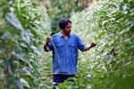 Organic Farm Tour at Sampran Riverside