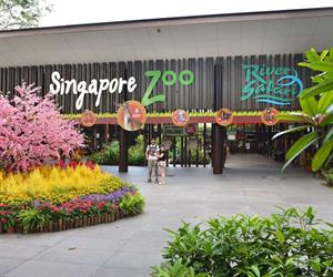 Admission Fee Singapore Zoo with Tram Ride
