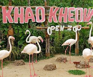 Khao Kheow Open Zoo Chonburi